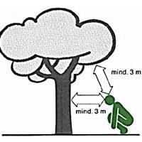 Verhalten bei Gewitter - einzel stehende Bäume meiden
